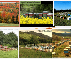 How The Beehive Property Management In Different Seasons – Top Bar Hive Management.
