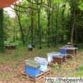 Definition Of Organic Beekeeping – What's Bee Farming Or Apiary?