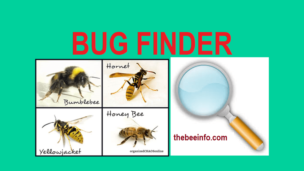 Bug Finder: Find here Bees, Ants, Wasps & other Insects to Recognize them easily. (160)