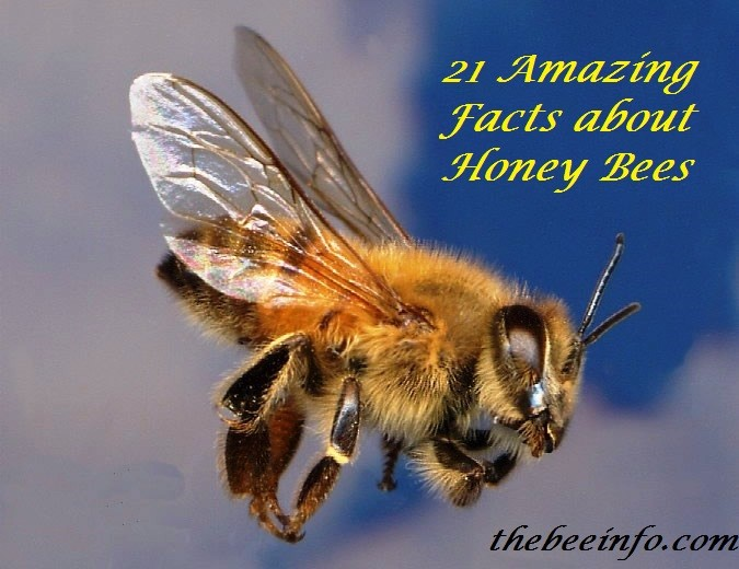 Africanized Bees Identification And Its Spreading History. (102)