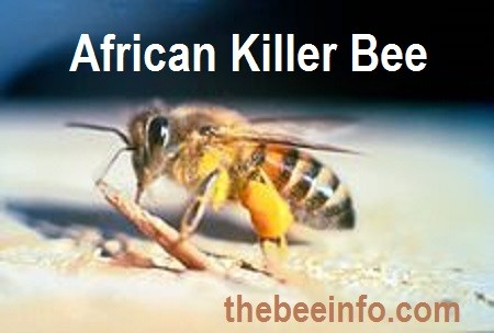 African Bees: African Killer Bees Facts & Its Wonderful Story! (103)