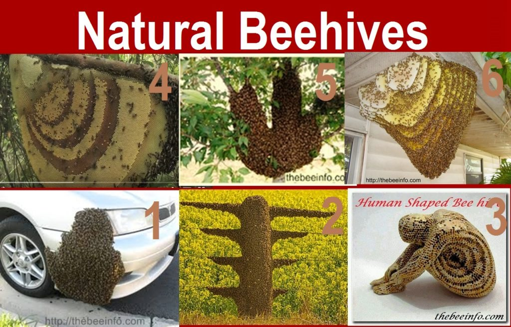 Top 10 Honeybee Images: Different Types Of Honey Bee Hives Picture – Natural And Apiary Hives. (105)
