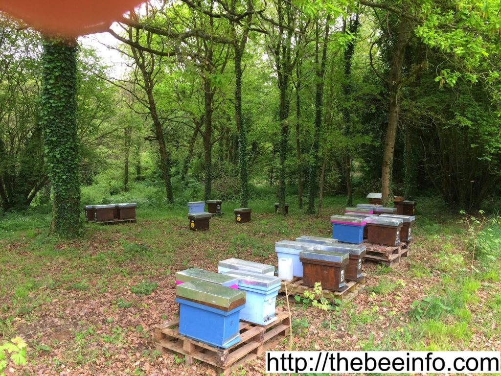117: Honey Farm, Apiary or Bee Farm & Definition Of Organic Beekeeping.