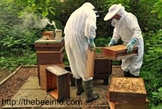 Share Bee Hive Works To Make Beekeeping Easier & Comfortable. (122)
