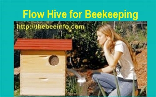 Flow Hive For HoneyBees Makes Beekeeping Easier Than Ever! (124)