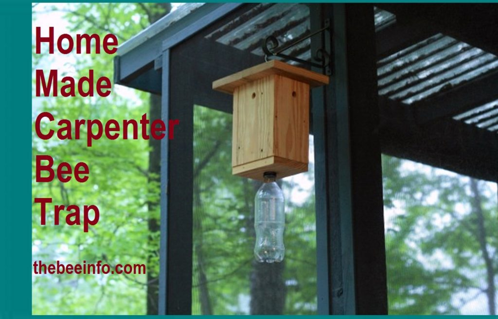 How to Get Rid of Bees: Homemade Carpenter Bees Trap. (129)
