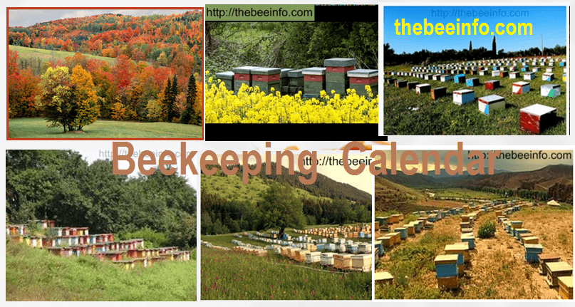 Beekeeping Calendar – Beehive Management Schedule For 12 months. (135)