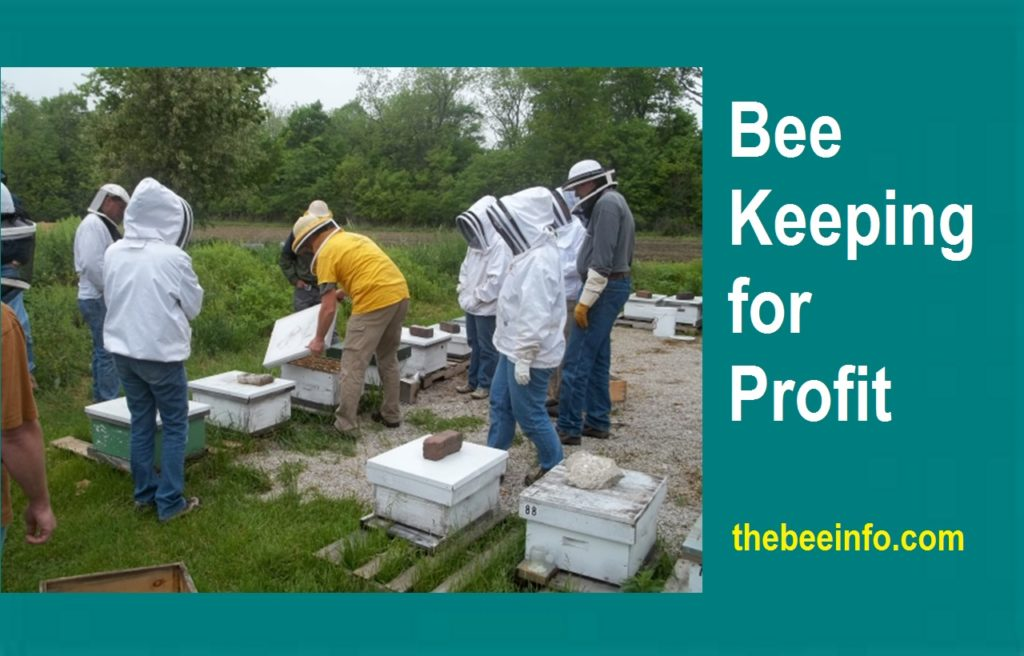 Beekeeping for Profit – How Much Money Can A Beekeeper Make Each Year? (138)