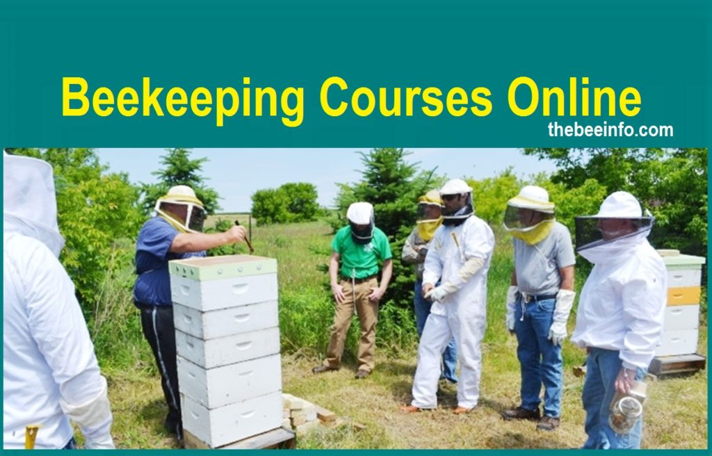 Beekeeping Courses Online – Beekeeping Courses for Beginners. (147)