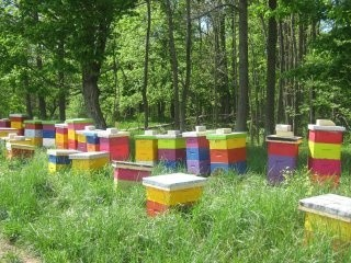 Beekeepers Near Me - Honey Bee Information - Best Topics in Beekeeping. (159)