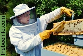180: A Treatise on Modern Honey Bee Management.