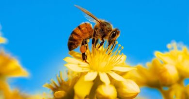 182: The Basis for Honey Bee Management.