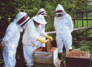 171: How to Get Rid of Bees & Avoid Honey Bee Problem?