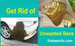 How to Get Rid of Bees & Avoid Honey Bee Problem? (171)