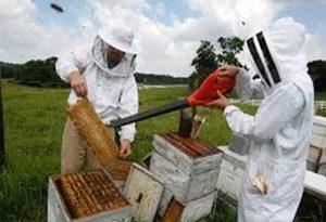 183: Honey Bee Management: Limiting Factors.