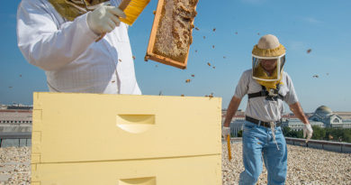 173: Honey Bee Colony Structure - What They Do In The Hive?