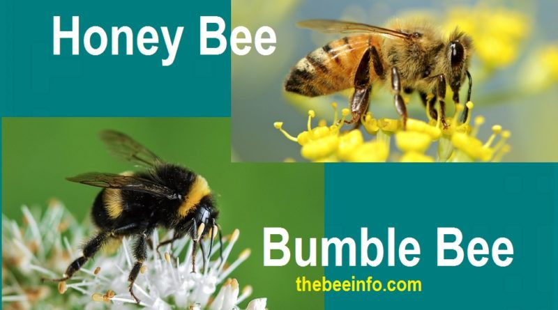 174: Difference Between Honey Bees аnd Bumblebees.