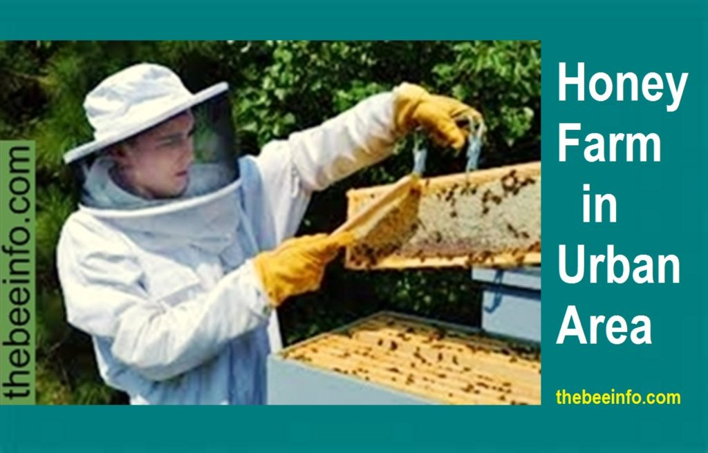 Honey Farm in the USA - Apiculture or Honey Production in Urban Area! (179)