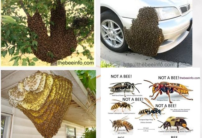 185: Learn About the Different Types of Bees - 10 Broad Sorts of Honey Bee Worldwide.