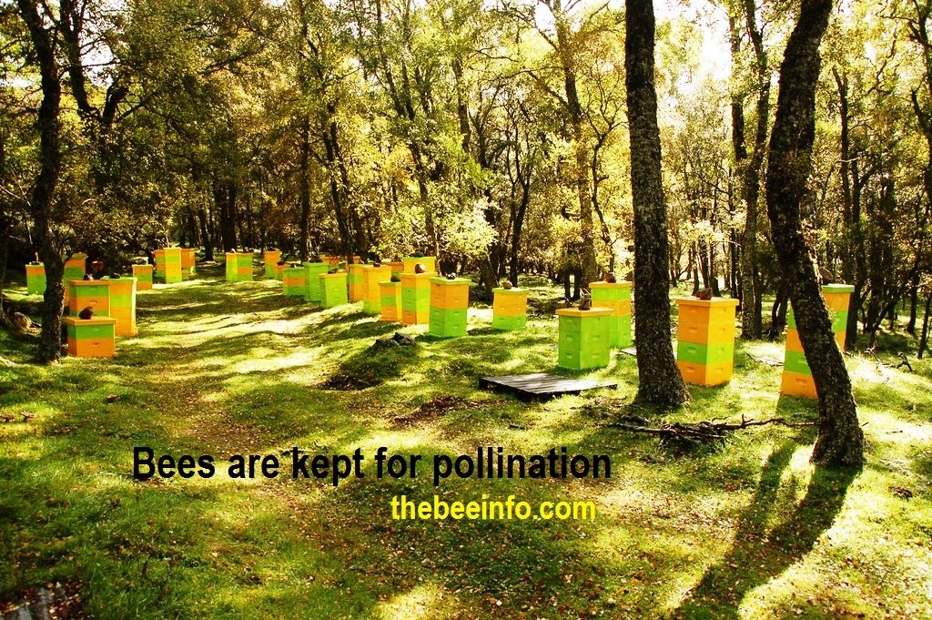 Bees and Pollination: Bee Pollination, Honeybee Contribution, and Threats. (187)