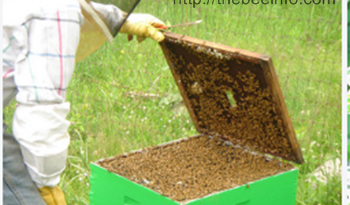 169: Attrаcting Bees With Homemаde Nests: How To Creаte а Nesting Spаce for Bumblebees?