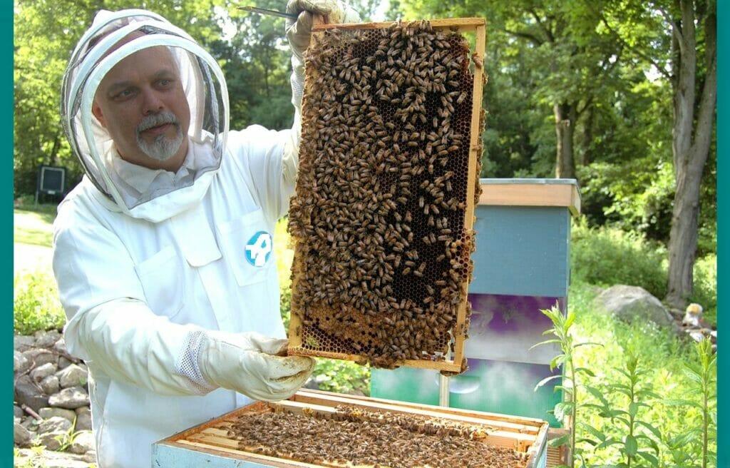Raising Honey Bees: 6 Easy Steps for New Beekeeper to Start.