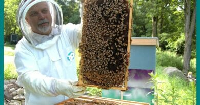 Raising Honey Bees: 6 Easy Steps for New Beekeeper to Start.