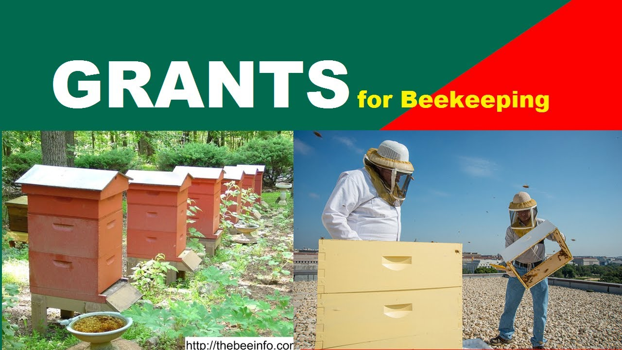 Grants For Beekeeping: USDA Grants, Agricultural Grants, And Honey Bee Laws.