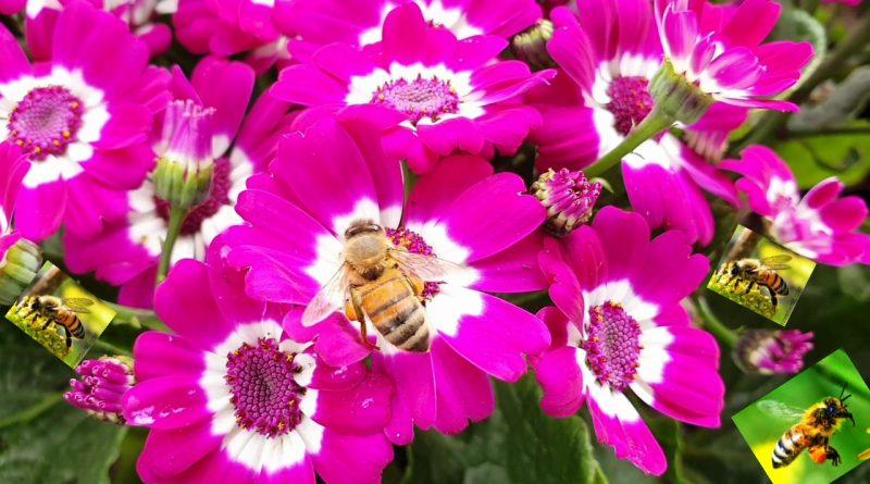How Do Bees Make Honey? What do Bees do with Honey? How to Process & Filter Honey?