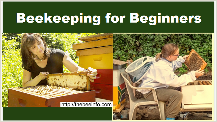 Beekeeping for Beginners: How to Start Beekeeping? 6 Simple Steps to Start Beekeeping for Raising Honey Bees.