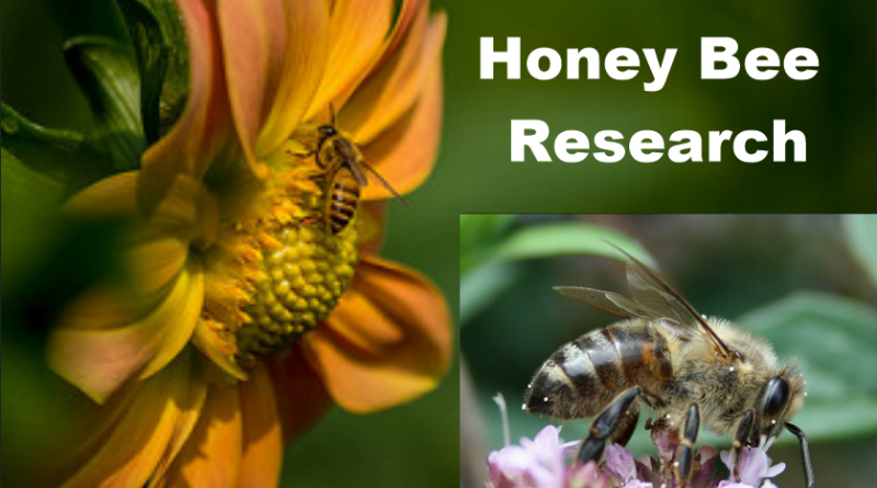 Where Do You Find the Research Centers on Honey & Honey Bee?